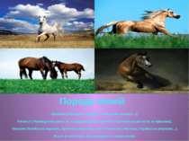 Породи коней Крокові (Першерон, Арден, Російський ваговоз...); Рисисті ( Фран...