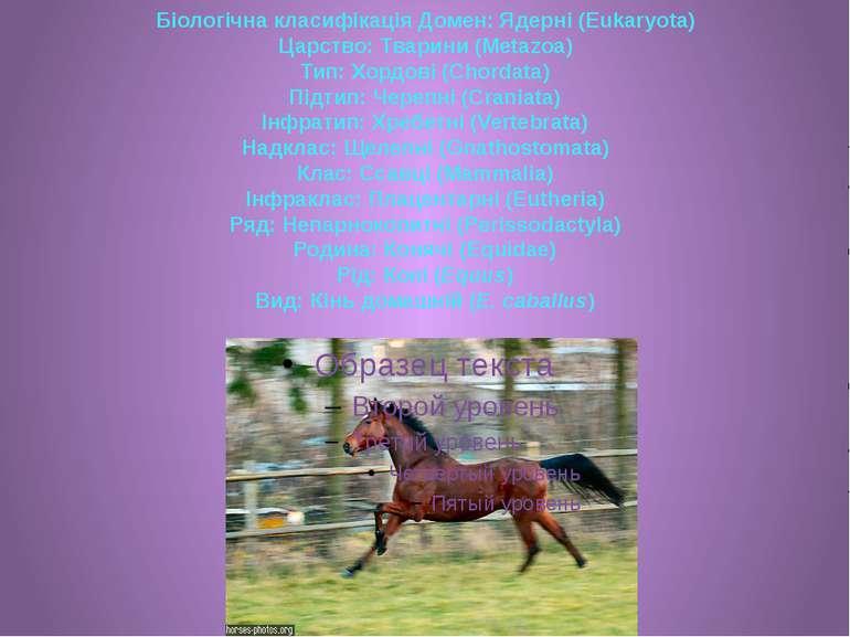 Біологічна класифікація Домен: Ядерні (Eukaryota) Царство: Тварини (Metazoa) ...