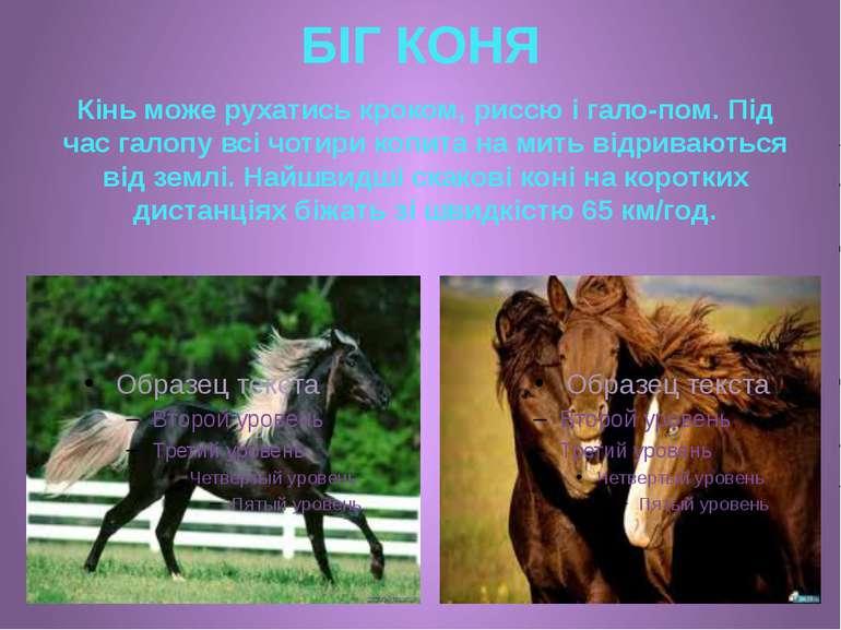 БІГ КОНЯ Кінь може рухатись кроком, риссю і гало пом. Під час галопу всі чоти...