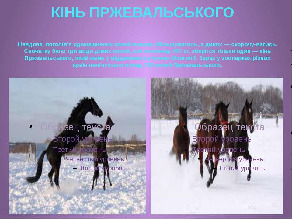 КІНЬ ПРЖЕВАЛЬСЬКОГО Невдовзі поголів'я одомашнених коней почало збільшуватись...