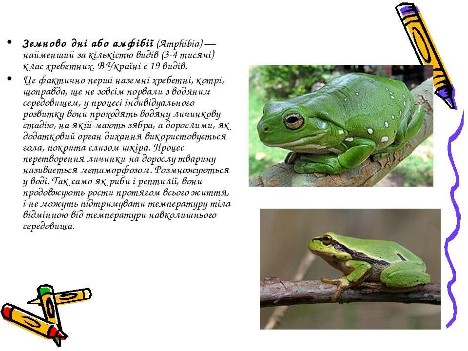 Земново дні або амфібії (Amphibia)— найменший за кількістю видів (3-4 тисячі...