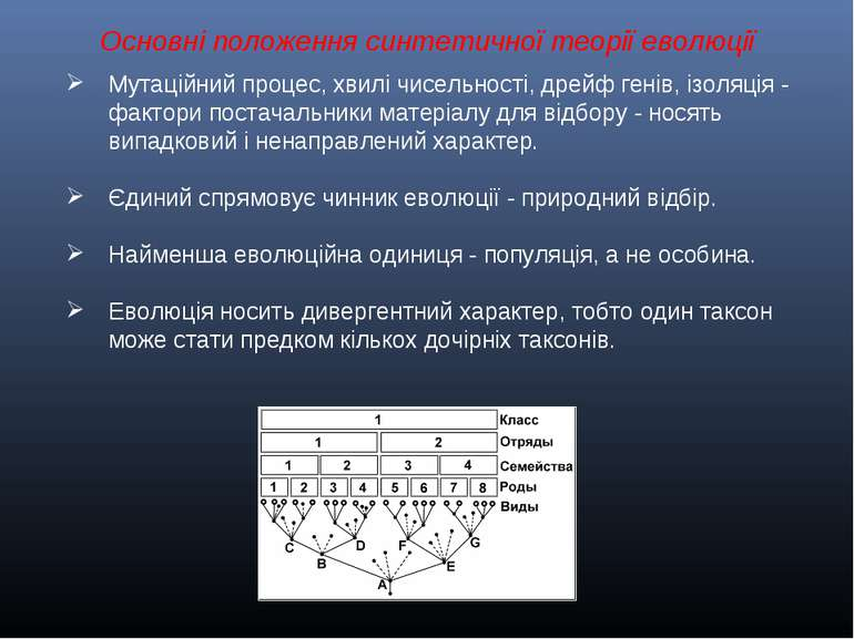 Основні положення синтетичної теорії еволюції Мутаційний процес, хвилі чисель...