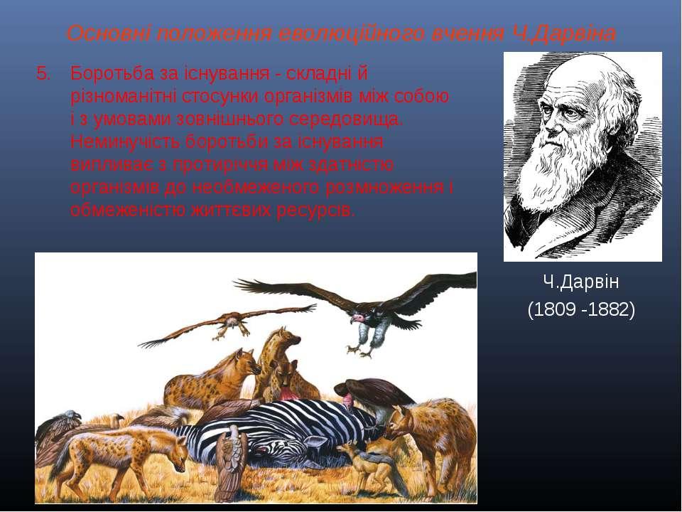 Основні положення еволюційного вчення Ч.Дарвіна Ч.Дарвін (1809 -1882) Боротьб...