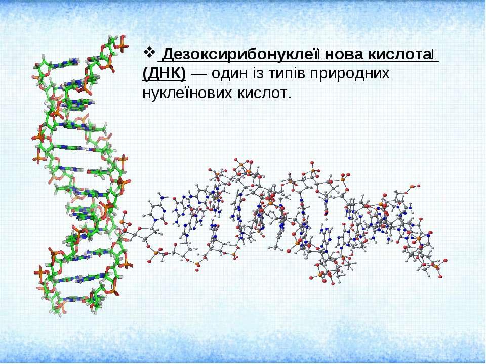 Дезоксирибонуклеї нова кислота (ДНК) — один із типів природних нуклеїнових ки...