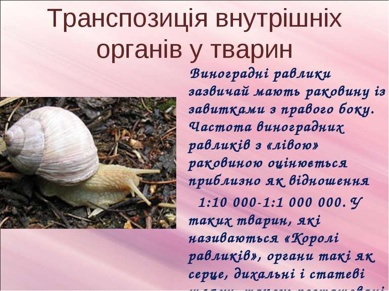 Транспозиція внутрішніх органів у тварин Виноградні равлики зазвичай мають ра...