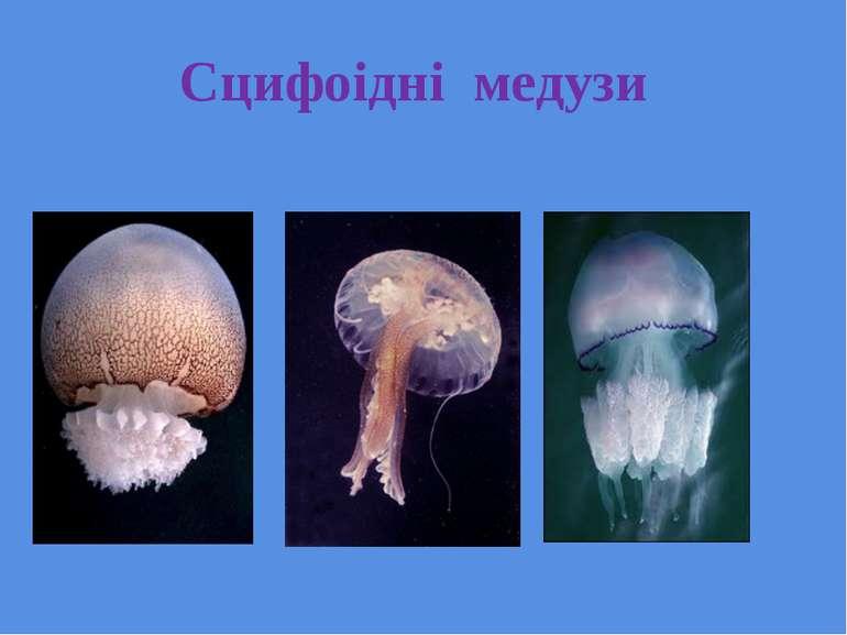 Сцифоідні медузи