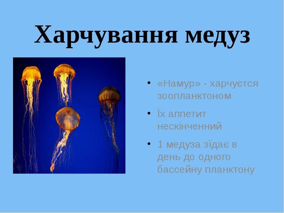 Харчування медуз «Намур» - харчуєтся зоопланктоном Їх аппетит нескінченний 1 ...