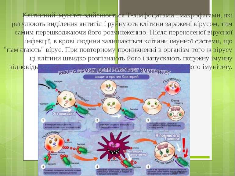 Клітинний імунітет здійснюється Т-лімфоцитами і макрофагами, які регулюють ви...