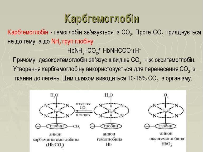 Карбгемоглобін Карбгемоглобін - гемоглобін зв'язується із СО2. Проте СО2 приє...