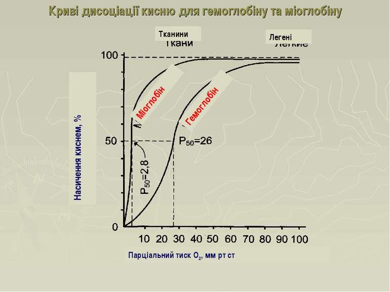 Криві дисоціації кисню для гемоглобіну та міоглобіну Насичення киснем, % Леге...