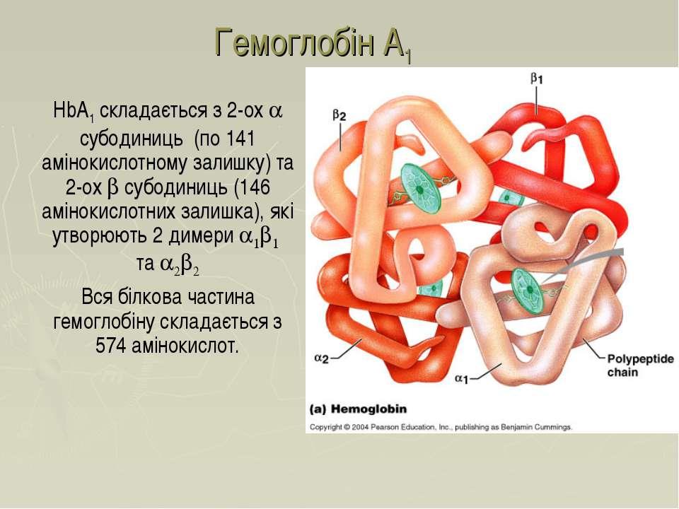 Гемоглобін A1 HbA1 складається з 2-ох a субодиниць (по 141 амінокислотному за...
