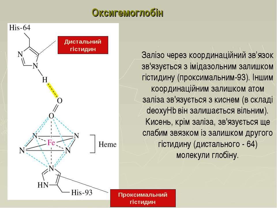 Залізо через координаційний зв'язок зв'язується з імідазольним залишком гісти...