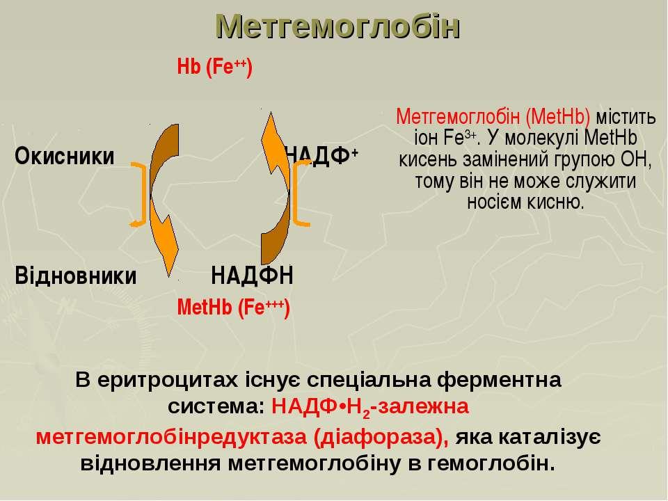 Hb (Fe++) Окисники НАДФ+ Відновники НAДФH MetHb (Fe+++) Метгемоглобін Метгемо...
