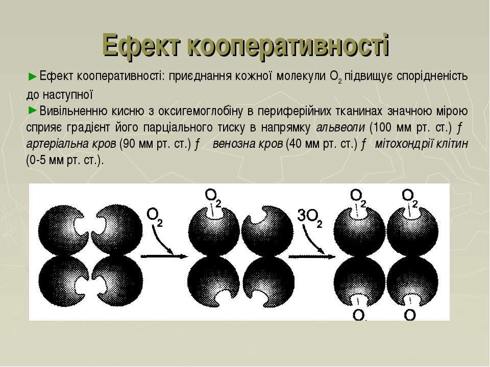 Ефект кооперативності Ефект кооперативності: приєднання кожної молекули O2 пі...
