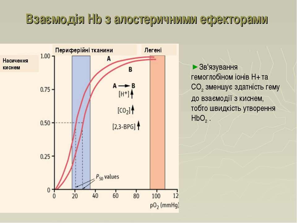 Взаємодія Hb з алостеричними ефекторами Зв'язування гемоглобіном іонів Н+ та ...