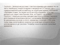 Скополія – багаторічна рослина з товстим кореневищем названа так на честь іта...