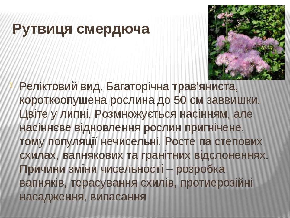 Рутвиця смердюча Реліктовий вид. Багаторічна трав'яниста, короткоопушена росл...