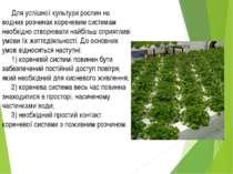 Для успішної культури рослин на водних розчинах кореневим системам необхідно ...