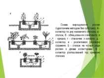 Схема вирощування рослин гідропонним методом без субстрату: А - колектор по д...