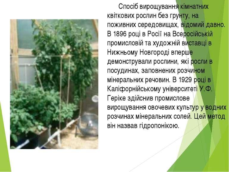 Спосіб вирощування кімнатних квіткових рослин без грунту, на поживних середов...