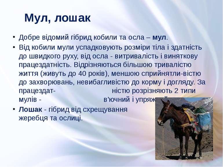 Добре відомий гібрид кобили та осла – мул. Від кобили мули успадковують розмі...