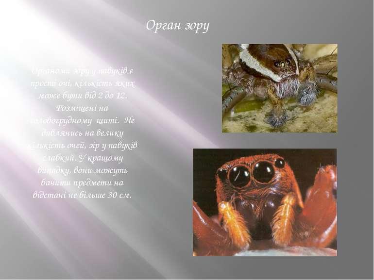 Орган зору Органами зору у павуків є прості очі, кількість яких може бути від...