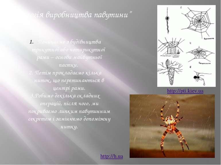 """""""Технологія виробництва павутини"""" Починаємо з будівництва трикутної або чотир..."""