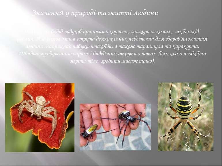 Значення у природі та житті людини Більшість видів павуків приносить користь,...