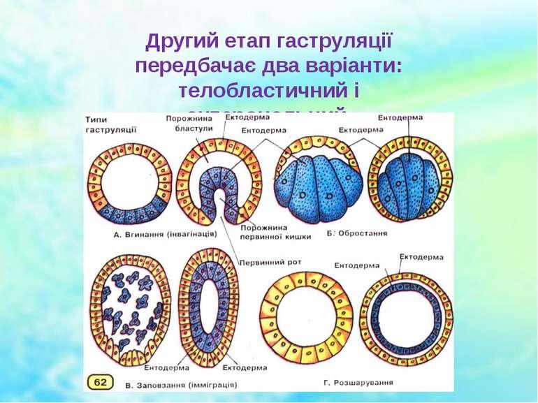 Другий етап гаструляції передбачає два варіанти: телобластичний і ентероцельний.