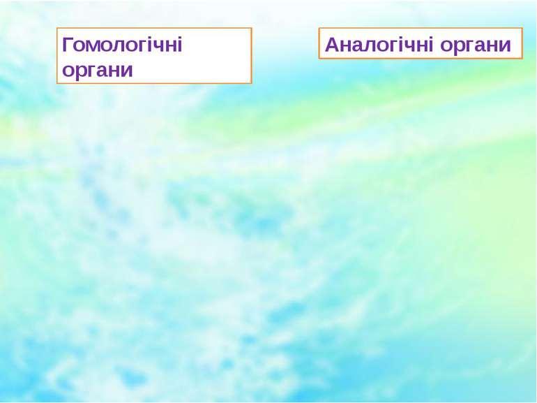 Гомологічні органи Аналогічні органи