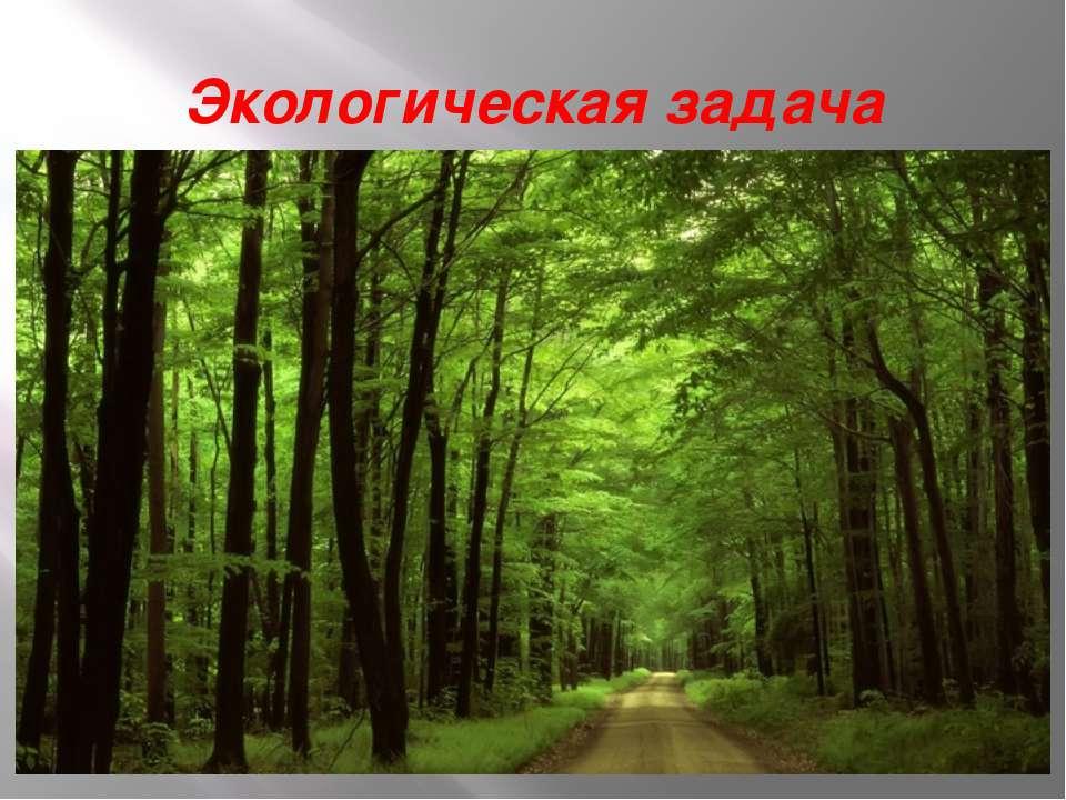 Экологическая задача