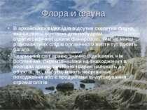 Флора и фауна В архейських відкладів відсутня скелетна фауна, яка служить осн...