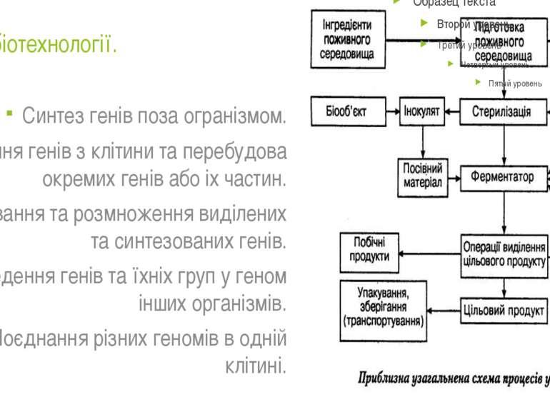 Методи біотехнології. Синтез генів поза огранізмом. Виділення генів з клітини...