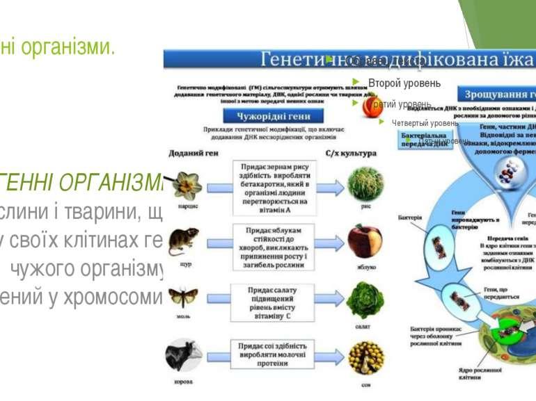 Трансгенні організми. ТРАНСГЕННІ ОРГАНІЗМИ – це рослини і тварини, що містять...