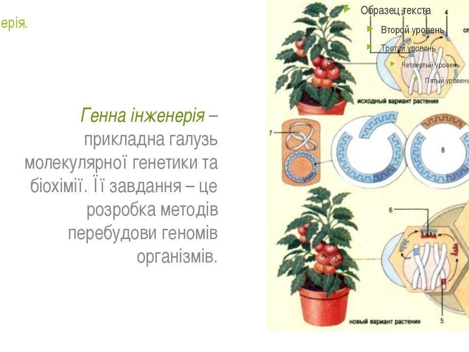 Генна інженерія. Генна інженерія – прикладна галузь молекулярної генетики та ...