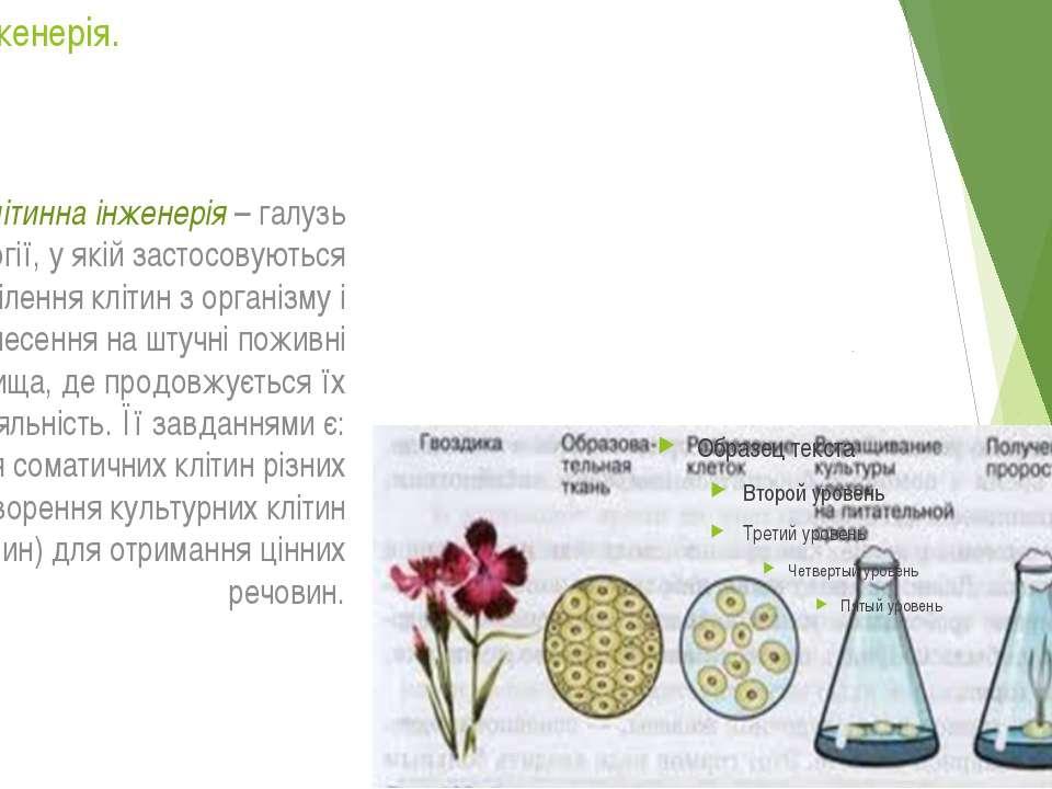 Клітина інженерія. Клітинна інженерія – галузь біотехнології, у якій застосов...
