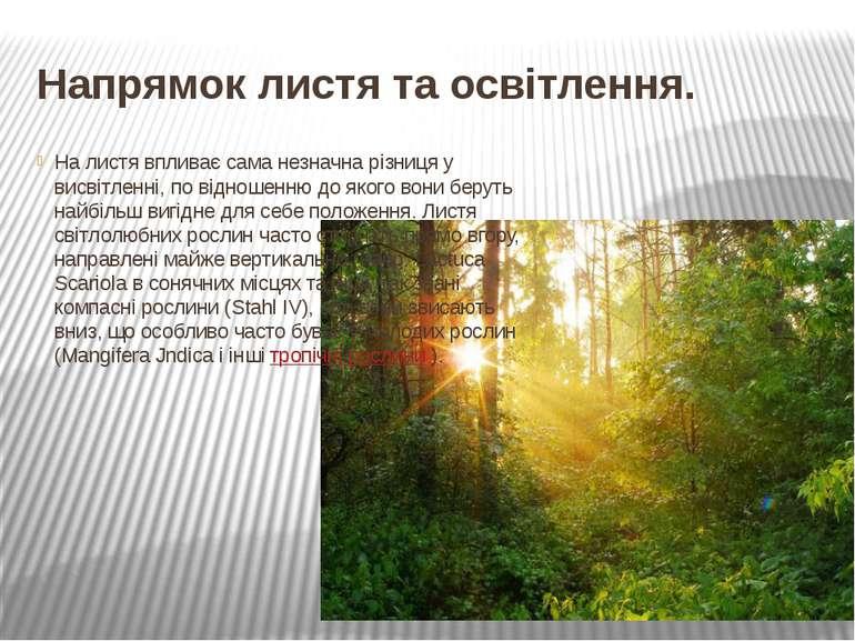 Напрямок листя та освітлення. На листя впливає сама незначна різниця у висвіт...