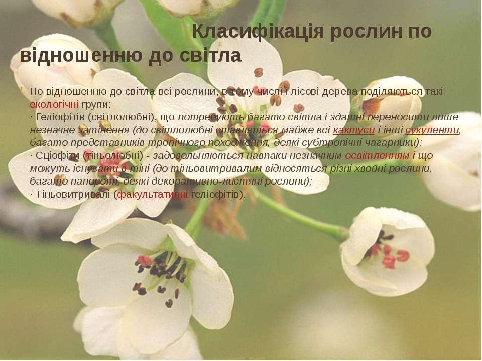 Класифікація рослин по відношенню до світла По відношенню до світла всі росли...