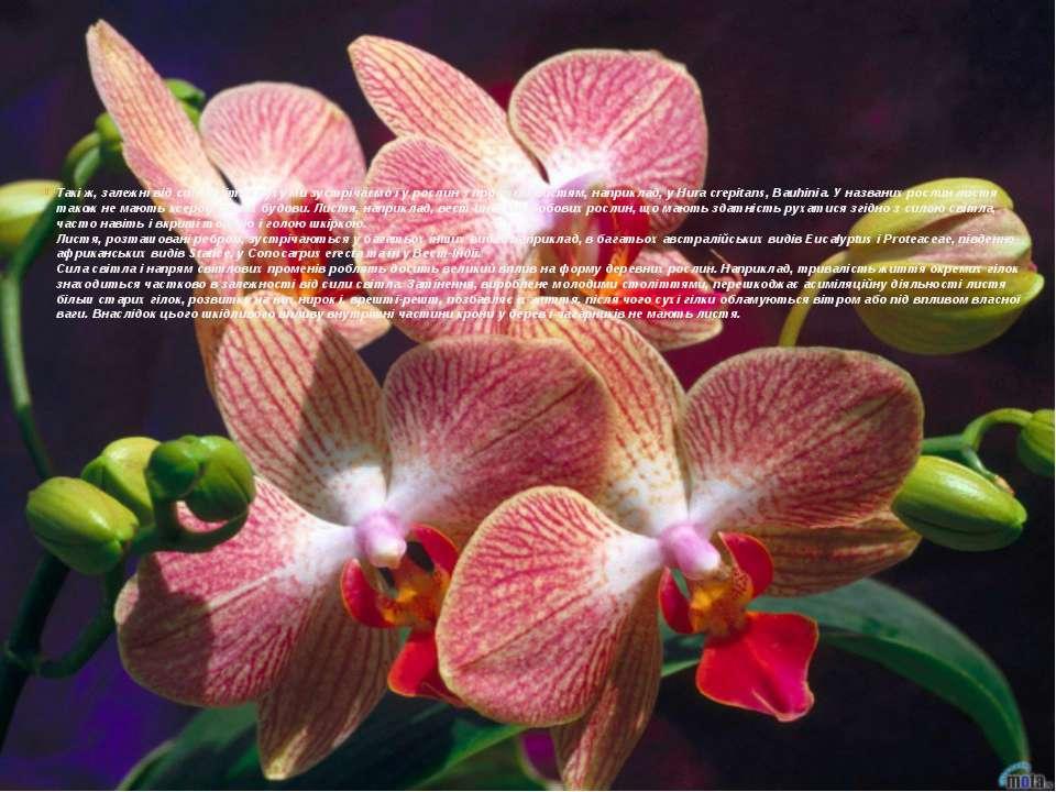 Такі ж, залежні від сили світла руху ми зустрічаємо і у рослин з простим лист...