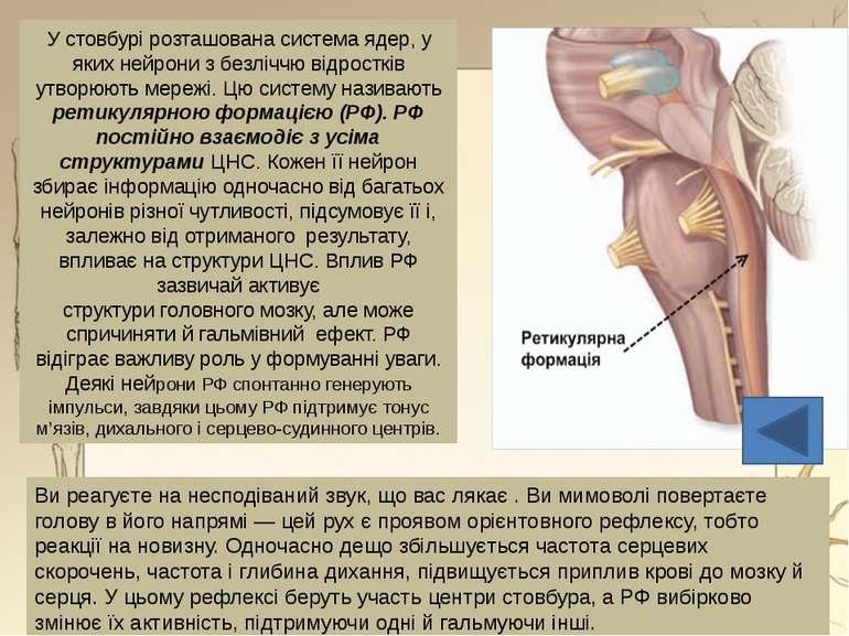 Лімбічна система - сукупність ряду структур головного мозку Бере участь у рег...