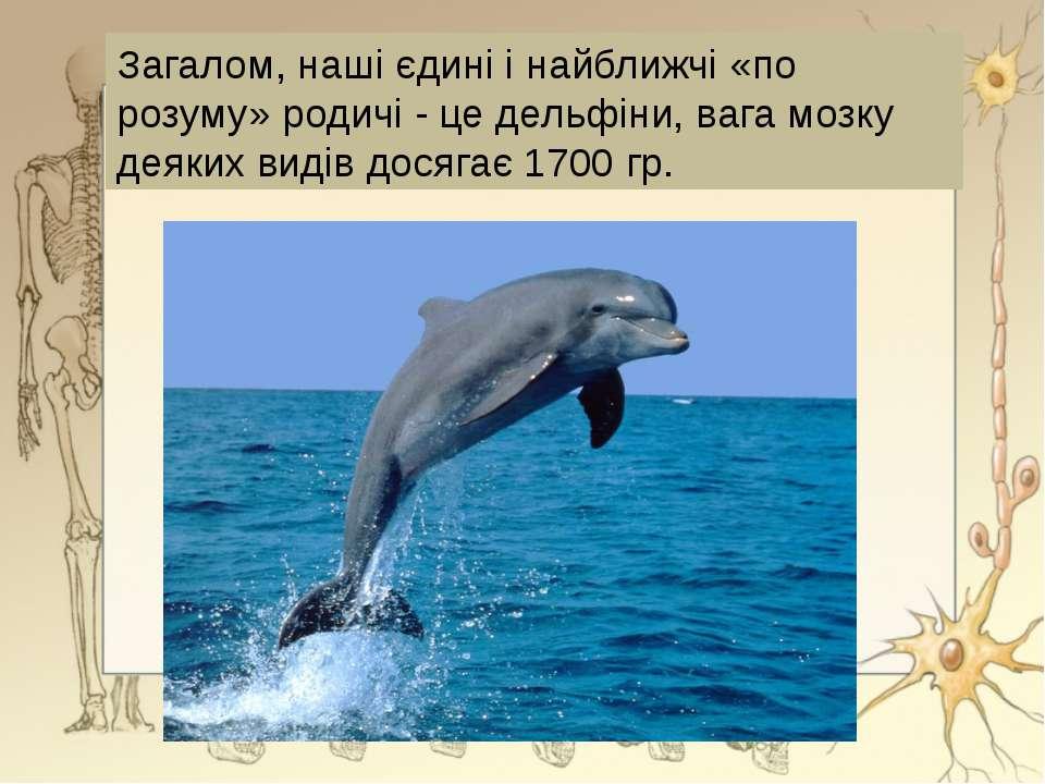Загалом, наші єдині і найближчі «по розуму» родичі - це дельфіни, вага мозку ...