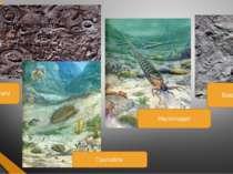 Археоцитати Наутилоідеї Брахіоподи Трилобіти