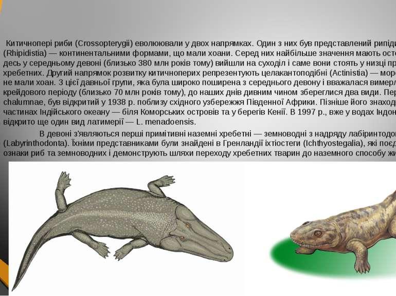 Китичнопері риби (Crossopterygii) еволюювали у двох напрямках. Один з них був...