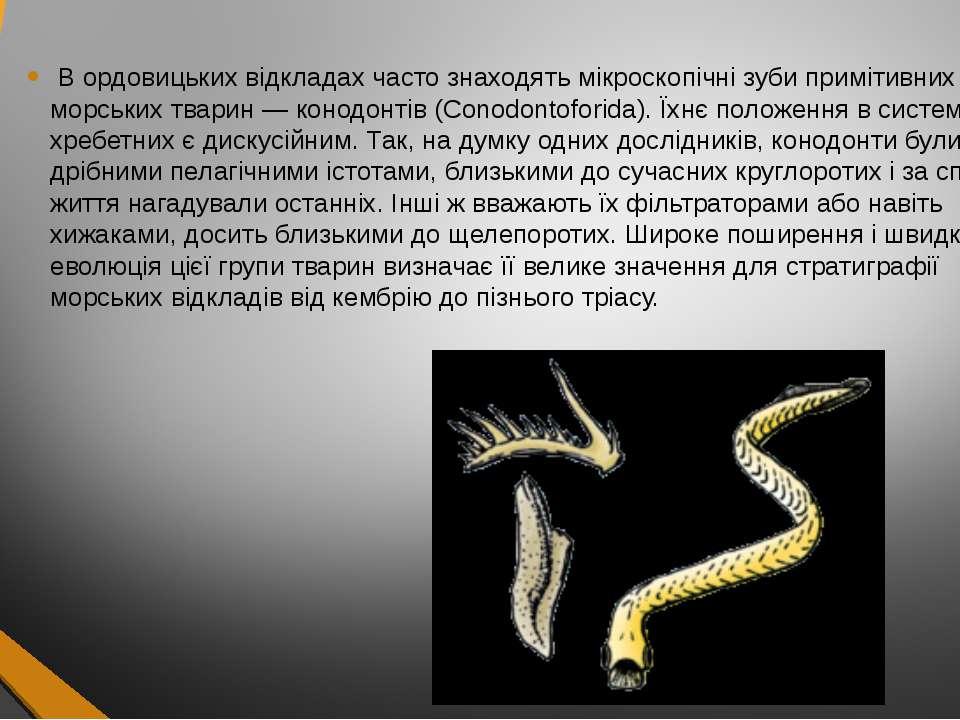 В ордовицьких відкладах часто знаходять мікроскопічні зуби примітивних морськ...