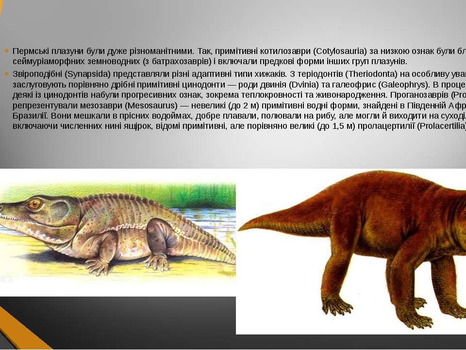 Пермські плазуни були дуже різноманітними. Так, примітивні котилозаври (Cotyl...