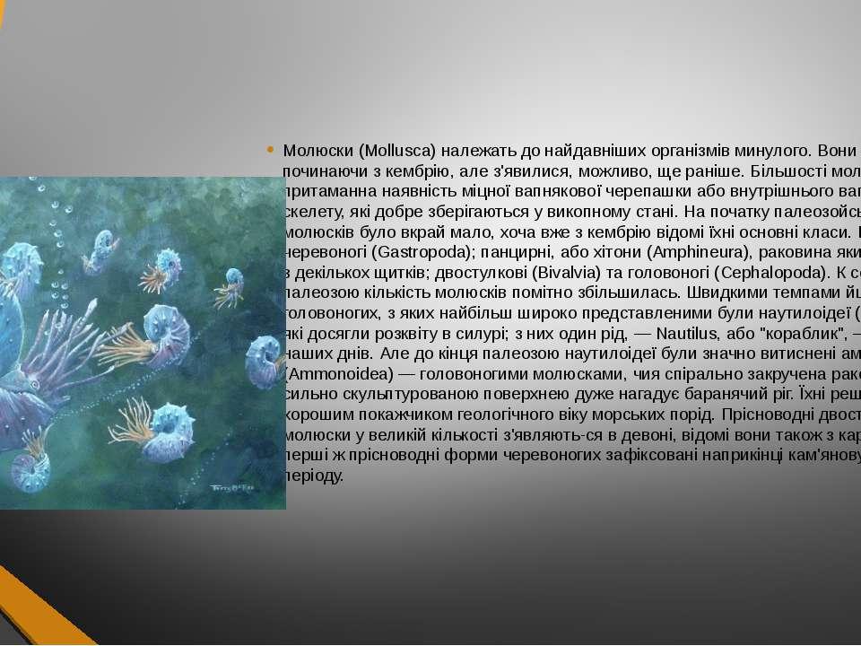Молюски (Mollusca) належать до найдавніших організмів минулого. Вони відомі п...