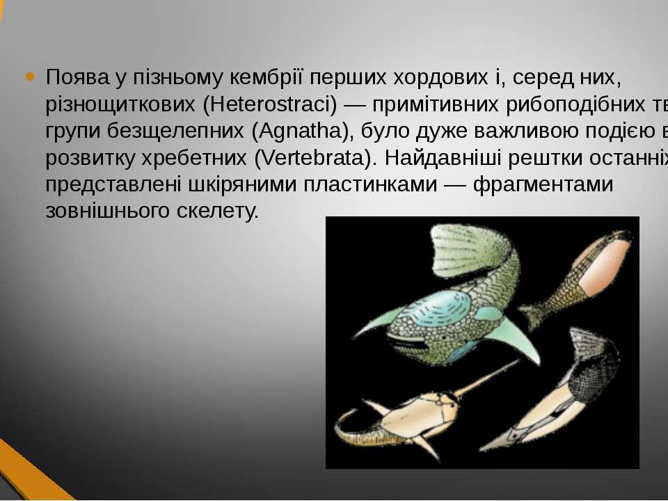 Поява у пізньому кембрії перших хордових і, серед них, різнощиткових (Heteros...