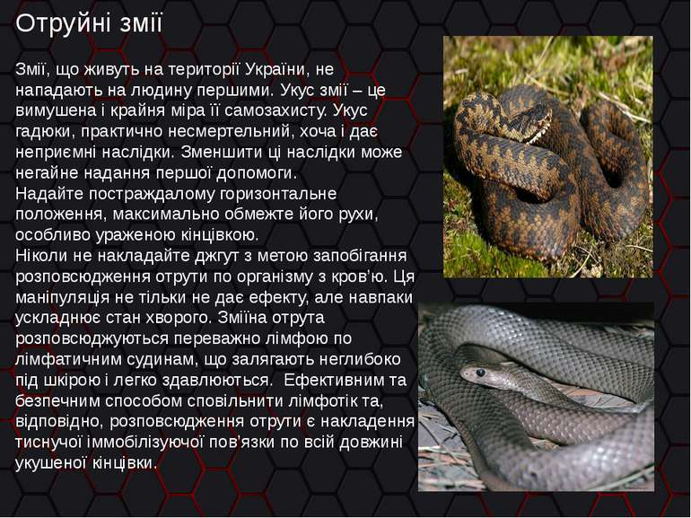 Григо?рьевич отруйні змії україни фото стальные бесшовные