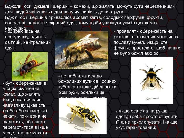 Бджоли, оси, джмелі і шершні – комахи, що жалять, можуть бути небезпечними дл...