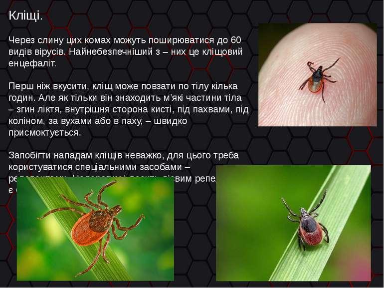 Кліщі. Через слину цих комах можуть поширюватися до 60 видів вірусів. Найнебе...